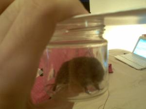 A mouse in a jar